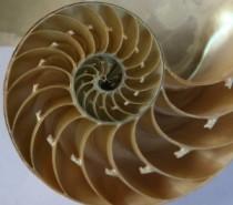 Fibonači i njegov čarobni niz
