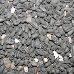 Među ugljenisanim zrnima obične i dvozrne pšenice sa Koznika kriju se otrovne primese
