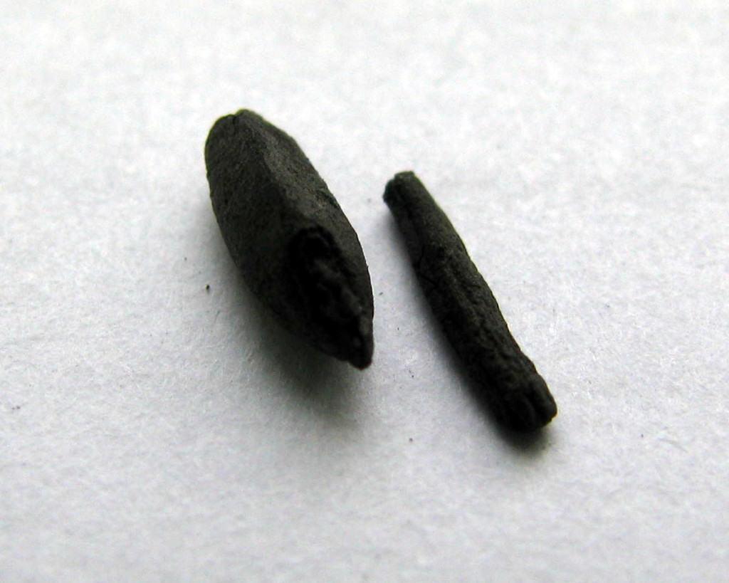 Ugljenisano zrno raži i sklerocija ražene glavnice sa Koznika