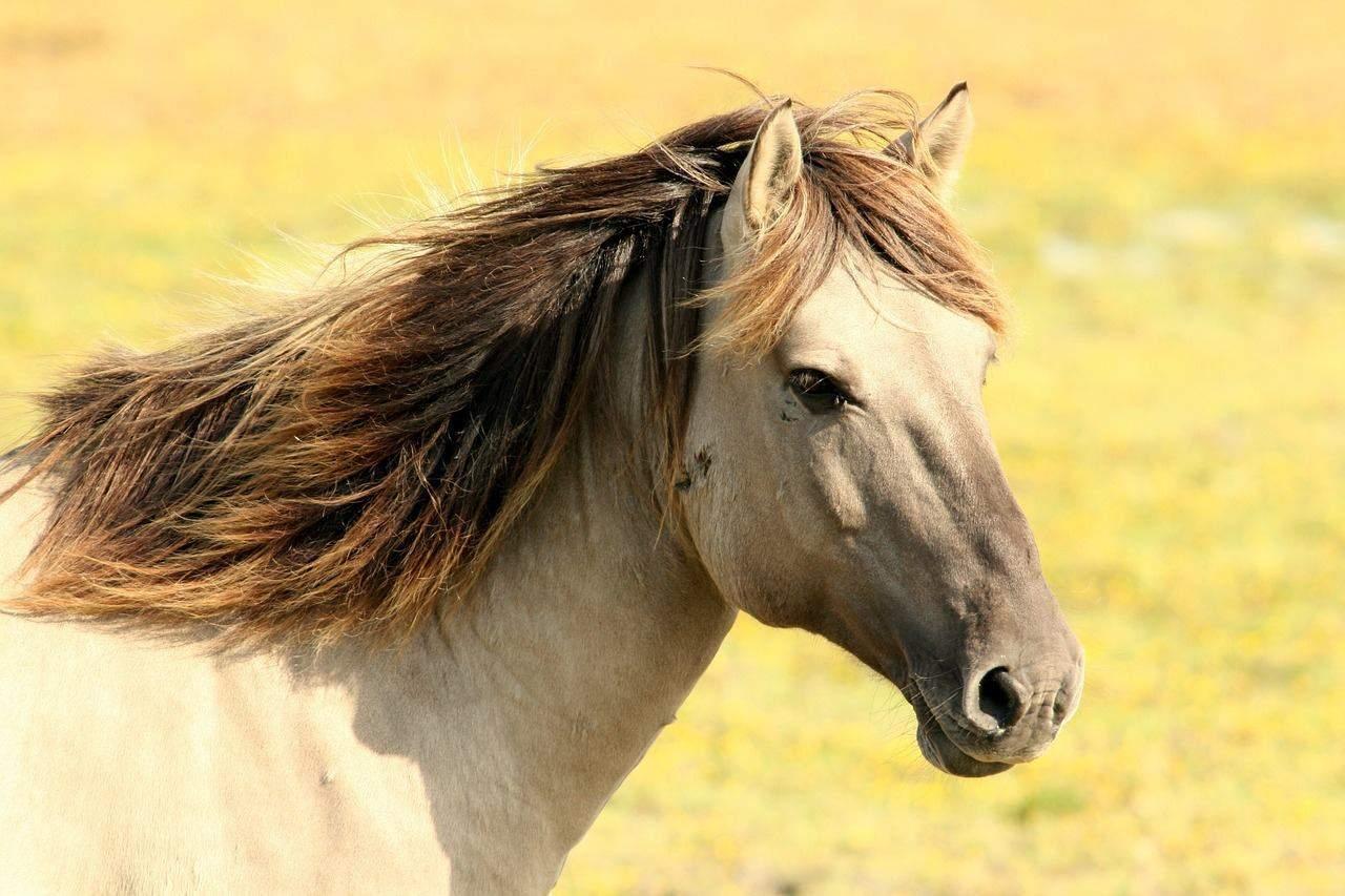 horse-197199_1280 (1)