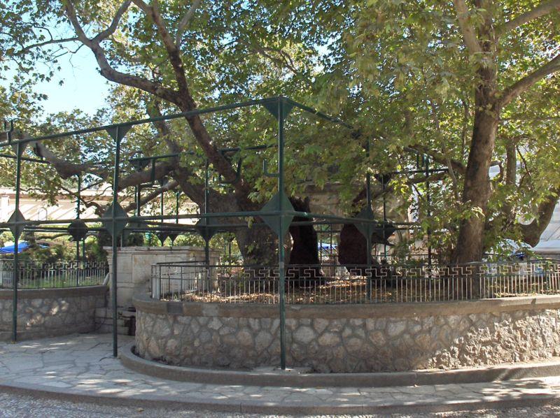 Hipokratovo drvo, ostrvo Kos, foto Steven Fruitsmaak via Wikimedia Commons