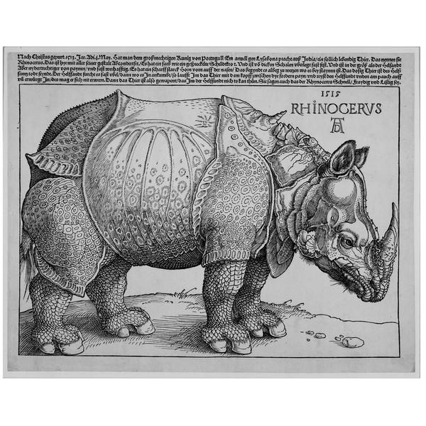 Albreht Direr: Rhinoceros (Nosorog), 1515,