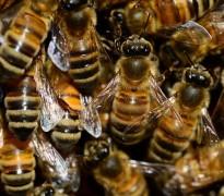 "Suzana Spasić: Eho ili ""pčelata na kapata"""
