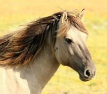 Jasna Finderle: Konjušar
